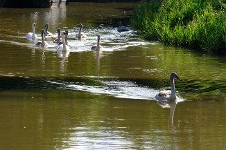 Swans - I won!
